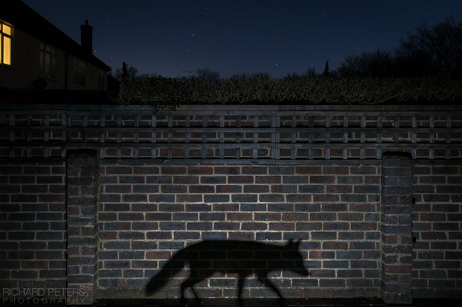 GDT_european_wildlife_photographer_of_the_year_richard_peters