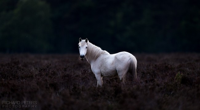 A trip to the New Forest with the D5